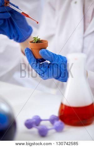 genetic modified GMO plant in the laboratory