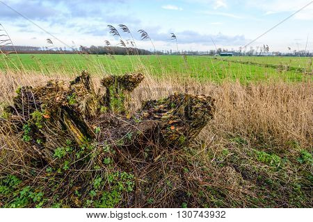 An old rotten tree stump covered with all kinds of fresh wild plants is situated on the edge of a big green meadow.