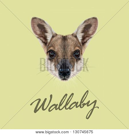 Vector Illustrated Portrait of Wallaby. Cute face of wild Australian mammal Wallaby on yellow background.