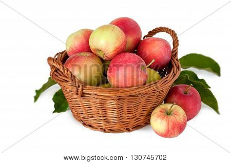 Apples in a basket on a white background . Harvest of apples . Autumn Gifts . Fruit