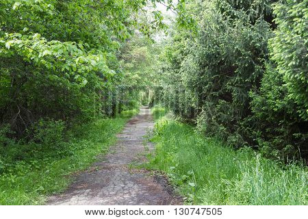 Overgrown Alley In The Park