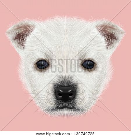 Illustrated Portrait of West Highland White Terrier. Cute white fluffy face of puppy on pink background.