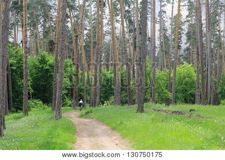 a healthy lifestyle and the beauty of the forest  girl riding a bike on a narrow road in the forest.  stand tall green pines