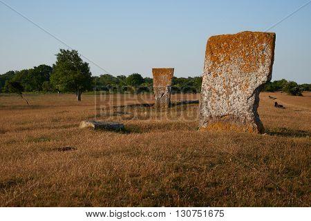 Megaliths and black sheeps Isle if Oeland province Kalmar Sweden