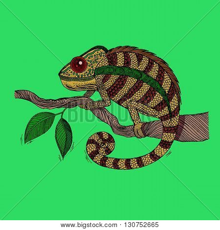 Chameleon on leaf. Colorful hand drawn vector stock illustration