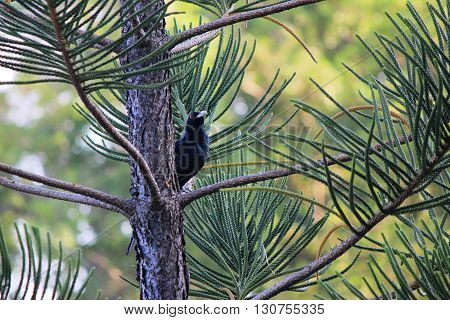 Photo showed a black raven resting on a branch