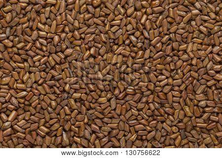 Organic Chinese senna or American sicklepod (Senna obtusifolia) seeds. Macro close up background texture. Top view.
