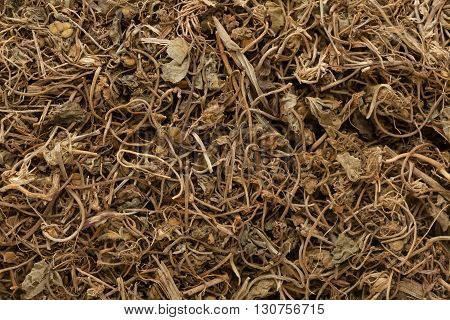 Organic Indian Pennywort or gotu kola (Centella asiatica). Macro close up background texture. Top view.