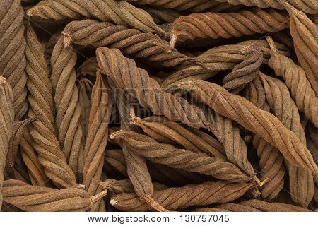 Organic Indian Marorphali or Indian Screw Tree (Helicteres isora) dried fruits. Macro close up background texture. Top view.