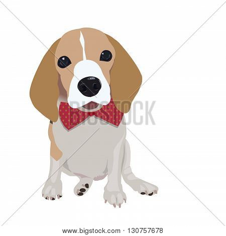 Cute Queen Elizabeth Pocket beagle with red bow on white backgroundvector illustration