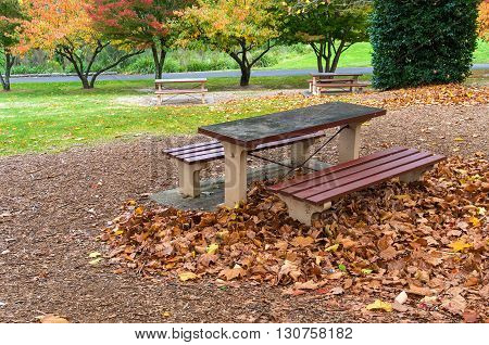 Picnic table and benches in an autumn park. Outdoor rest area with colourful trees on the background