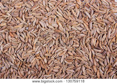 Close up of cumin seeds - spice. Macro.