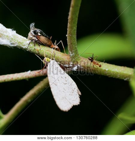 Macro photography showing a group of insect consist of butterfly, ant and Long Horn Leaf Hopper