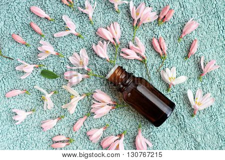 Aroma spa. Bottle essential oil, flowers, bathroom towel background. Top view.