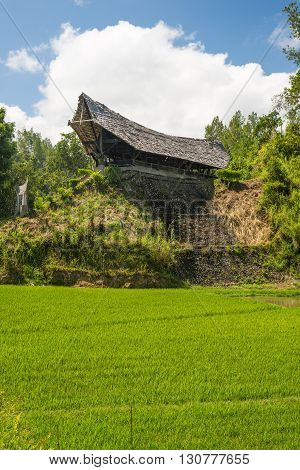 Traditional Toraja Village In Idyllic Rural Landscape
