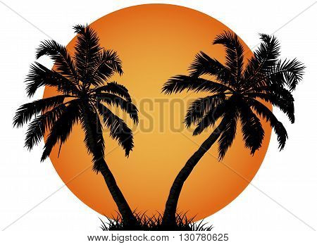 Palm tree in front of the summer sunset, vector art illustration.
