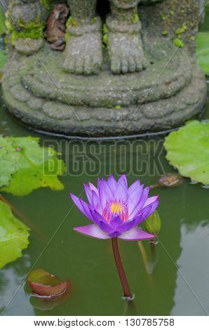 lotus flower under buddha's feet in mendut buddhist monastery