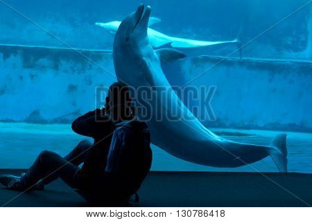 GENOA, ITALY - MARCH 22, 2016: Visitor takes photos as common bottlenose dolphins (Tursiops truncatus) swim in the Genoa Aquarium in Genoa, Liguria, Italy.