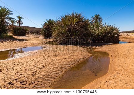 water in the oasis, Sahara desert, Morocco