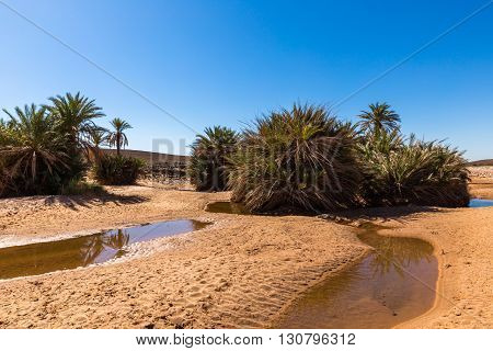 water in the oasis, Sahara desert Morocco