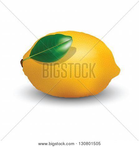 Lemon fruit for your design, lemon isolated on a white background