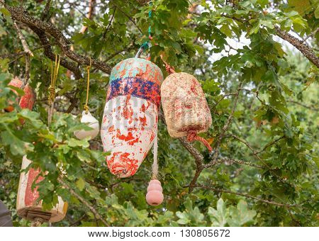 Colorful ancient fishing net floats hanging from a Garry Oak tree.