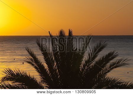 Silhouette Of Palm Trees In The Background Of The Red Sea