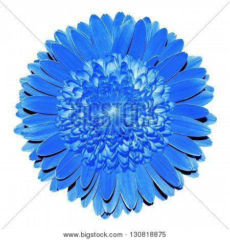 Surrealistic Fantasy Blue Flower Macro Isolated On White