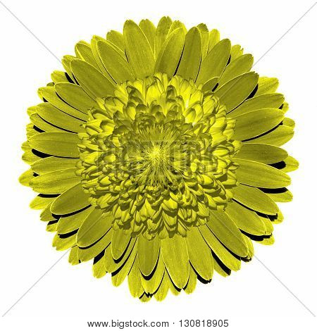 Surrealistic Fantasy Yellow Flower Macro Isolated On White