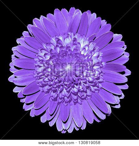 Surrealistic fantasy violet flower macro isolated on black