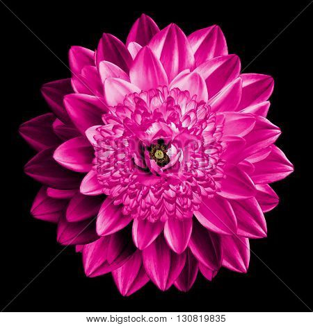 Surrealistic Fantasy Pink Flower Macro Isolated On Black