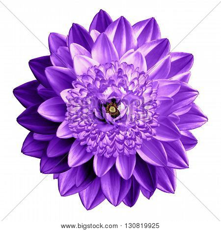 Surrealistic Fantasy Violet Flower Macro Isolated On White