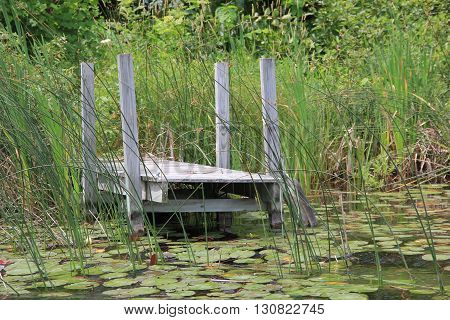 A small wooden dock in the lily pads.  Michigan