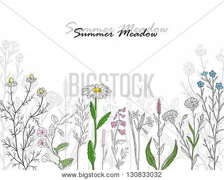 Vector card with hand drawn summer meadow. Vintage design with herbs and flowers illustration.