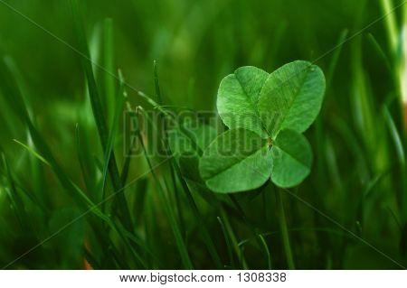 Four Leaves Shamrock
