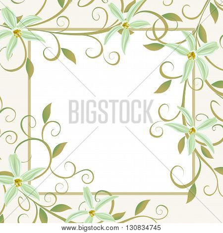 A bouquet of orchids. Background for text with white flowers orchids.