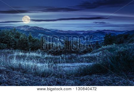Hillside Meadow With Forest In Mountain At Night