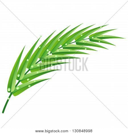 Green palm branch with water drops after rain