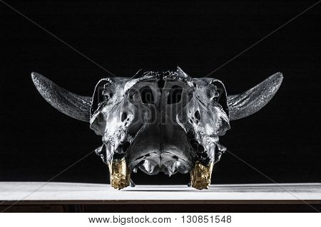 Photo of bulls skull on black background. Face view.