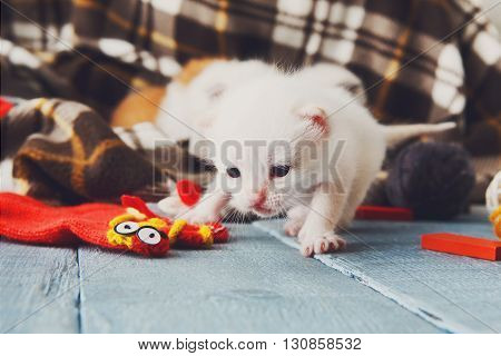 White newborn kitten in a plaid blanket. Sweet adorable tiny kitten on a serenity blue wood background. Small cat. Funny kitten closeup crawling and meowing
