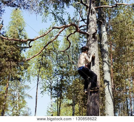 young man climbing on tree in forest close up hight, hanging dangerously, lifestyle people concept