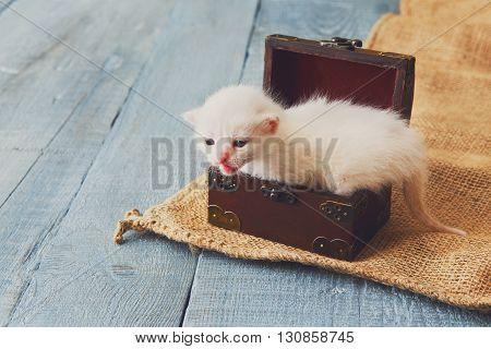 Cute white tiny Kitten in wooden jewel box. Small newborn kitten in jewel box at