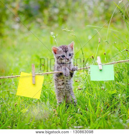 Kitten and Notes. Cute little kitten on the grass lawn. kitten walking on the grass in park