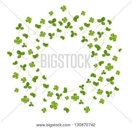 Clover leaves, isolated on white