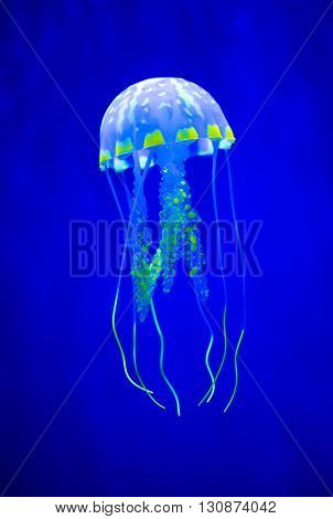 Real jellyfish on a blue background