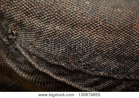 Komodo dragon (Varanus komodoensis). Skin texture.