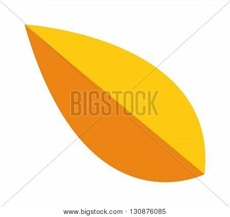 yellow leaf on white background. Yellow leaf autumn season and nature yellow leaf color plant foliage. Yellow leaf bright decoration and design yellow leaf golden natural october colorful flat leaf.