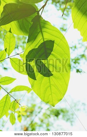 shadow with light on green leaves and sky background vintage tone