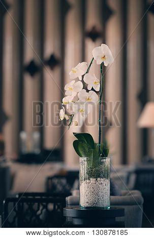 Ornamental plants White orchid flowerpot vintage tone