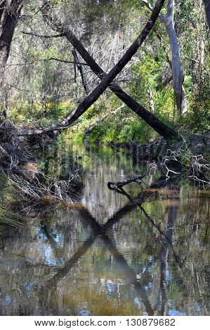 X marks the spot where two trees cross over a forest creek